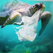Dia Internacional sin bolsas de Plastico🤢  Organico-Saludable-Sostenible 🌱🌱🌱  Está en nuestras manos, 👉👈, disminuir el consumo de plástico, en bolsas, juguetes,... y granito a granito el planeta 🌍 y la Naturaleza se recupera.  #mrbambukids #planetatierra #reciclaje #reutilizando #planetatierra